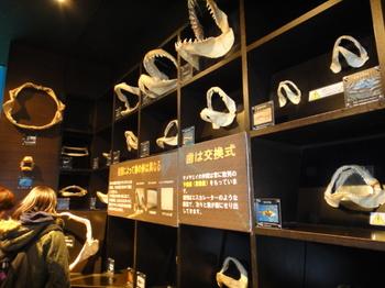 水族館12.JPG