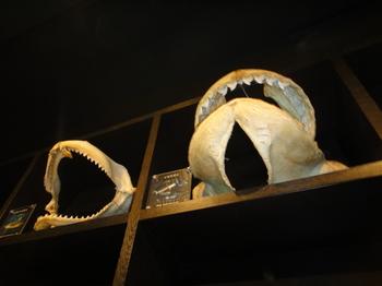 水族館13.JPG