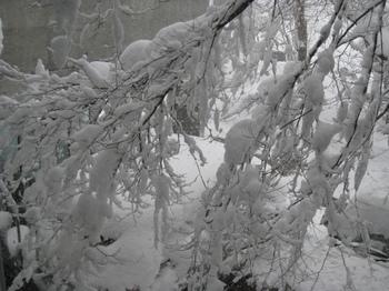 大雪・3.JPG