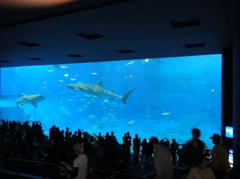 水族館1.JPG